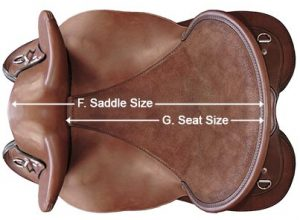 Saddle size vs seat size